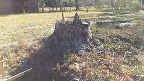 Stump Grinding in Camp Lejeune, North Carolina