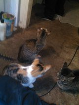 Cats to good home in Clarksville, Tennessee