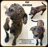 We still have four-legged babies looking for foster homes or forever homes in Cherry Point, North Carolina