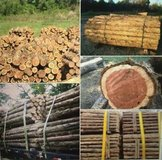 Cedar Fence Posts for sale in Beaumont, Texas