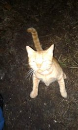 Found cat in Camp Lejeune, North Carolina
