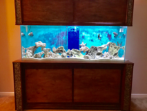 200 Gallon Saltwater Fish Tank in Travis AFB, California