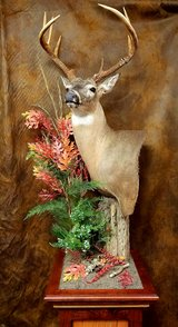 Church Creek Taxidermy in Camp Lejeune, North Carolina