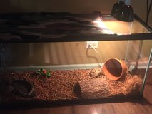 Russian Tortoise, tank, heat/day lamps, water & food dishes, log, pot in Naperville, Illinois