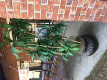 Artificial Plants in Beaufort, South Carolina
