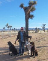 Certified Dog Trainer @ Blue Barn Ranch in Yucca Valley, California