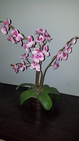 Silk Orchid in Vacaville, California