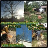 ANTONIO JOYA TREE SERVICES in Conroe, Texas