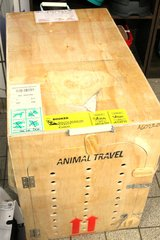Big dogs transport box for long journeys in aircraft in Ramstein, Germany