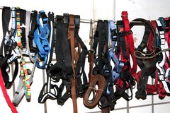 Free selection on Dog neck straps and dog leashes in Ramstein, Germany