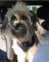 Small mixed terrier needs new home in Travis AFB, California