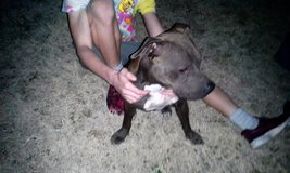 Found Dog in Lawton, Oklahoma