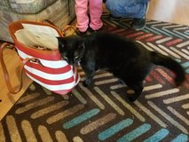 Looking for forever home for spunky cat in Ramstein, Germany