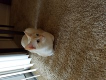 Male cat to good home in Fort Polk, Louisiana