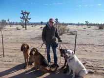 Fun And Effective Obedience Training in 29 Palms, California