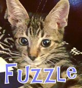Fuzzle needs a home! in Okinawa, Japan