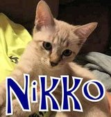 Playful Nikko is waiting for you! in Okinawa, Japan
