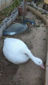 decoy geese big in Lawton, Oklahoma