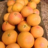 Pink Grapefruit for trade! in Fairfield, California