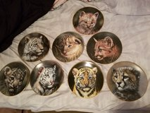 Cubs of the wild cats plates in Nellis AFB, Nevada