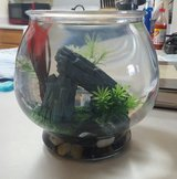 Glass fish bowl + accessoires in Fort Irwin, California