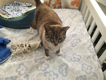 FAT CATS! Foster needed in Okinawa, Japan