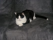 Female Cat in Oceanside, California