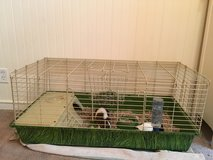 Guinea Pigs for sale in Beaufort, South Carolina