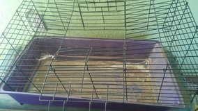 Free Rodent Cage in Yucca Valley, California