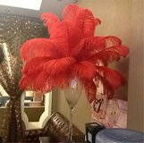 Red Ostrich Feathers in Vacaville, California