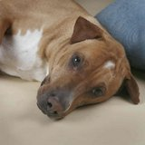 Can he come live with you? Titan needs a home. in Oceanside, California