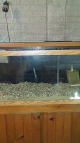 75 gallon aquarium with accessories in Sandwich, Illinois