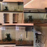 55gallon fish tank/all assesories in Lake Elsinore, California