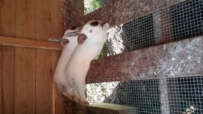 Rabbits for sale in Livingston, Texas