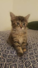 Kittens Ready For New Homes in Nellis AFB, Nevada