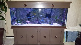 100g Fish tank / Aquarium with stand and canopy in Camp Pendleton, California