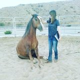 Horse training/lessons/apprentice work/TIP mustang trainer in 29 Palms, California