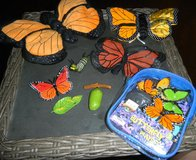 Monarch Butterfly Finger Puppet Plush Safari Life Cycle Figures + Butterflies Playset in Houston, Texas