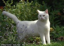 White Kitty in Kingwood, Texas