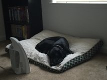 Black lab in Travis AFB, California