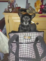 Sherpa  Dog Carrier in San Bernardino, California