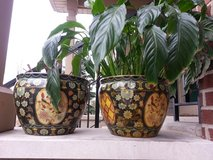 asian chinese planters in Elgin, Illinois