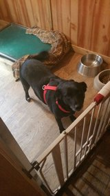 Anna Nanna Looking for A Forever Home in Baytown, Texas