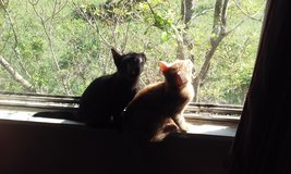 Free two male kittens in Conroe, Texas