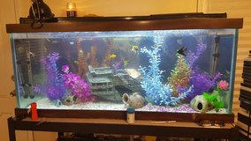 90 Gallon Fish tank in Joliet, Illinois