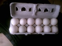 DUCK EGGS in 29 Palms, California