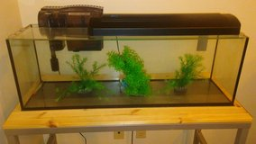 FISH TANK W/ FILTER, METAL STAND, OVERHEAD LIGHT, EXTRAS - REDUCED! $150 to $100! in Okinawa, Japan