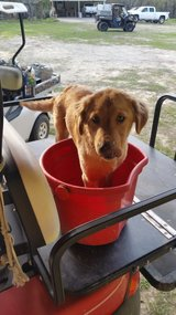 Found Female dog, Rocky Rd., Conroe in Conroe, Texas