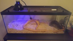 Cornsnake and cage in Yucca Valley, California