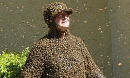 It's Honey Bee Swarm Season in Camp Lejeune, North Carolina